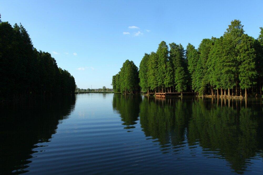 江苏--兴化千垛油菜花,李中水上森林,淮安河下古镇,周恩来故居图片